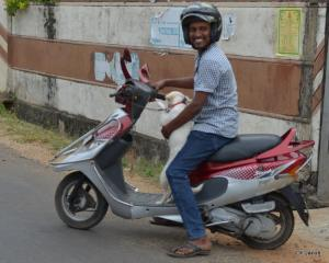 Doggy ride!